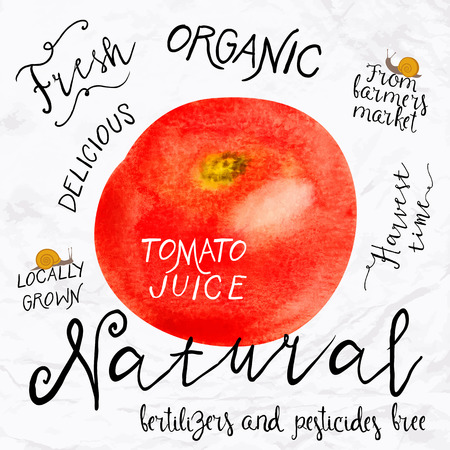 farmers market: Vector illustration of watercolor tomato, hand drawn in in 1950s or 1960s style. Concept for farmers market, organic food, natural product design, juice, sauce, ketchup, soup etc. Illustration