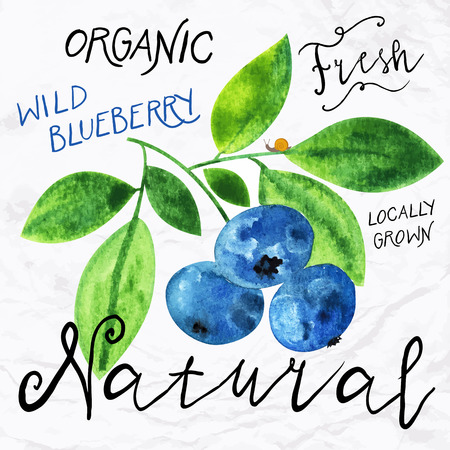 caffeine free: Vector illustration of watercolor wild blueberry, hand drawn in in 1950s or 1960s style. Concept for farmers market, organic food, natural product design, soap package, herbal tea, antioxidants etc.