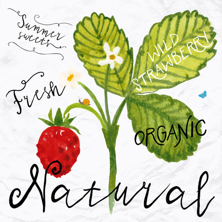 Vector illustration of watercolor wild strawberry, hand drawn in in 1950s or 1960s style. Concept for farmers market, organic food, natural product design, soap package, herbal tea, etc.
