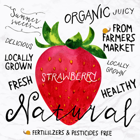 harvest time: Vector illustration of watercolor strawberry, hand drawn in 1950s or 1960s style. Concept for farmers market, organic food, natural product design, soap package, herbal tea, etc.