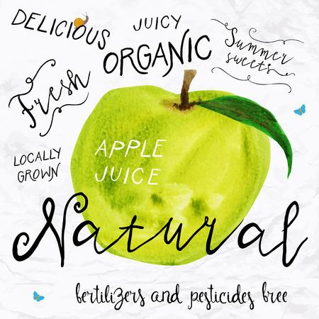 manzana: Ilustración vectorial de mandarina acuarela, dibujado a mano en 1950 o 1960 estilo. Concepto para el mercado de los granjeros, comida orgánica, diseño de producto natural, paquete de jabón, té de hierbas, etc. Vectores