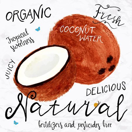 Vector illustration of watercolor coconut, hand drawn in in 1950s or 1960s style. Concept for farmers market, organic food, natural product design, soap package, coconut oil, etc. Vectores