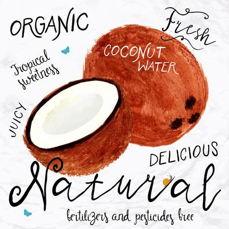 aceite de coco: Ilustración vectorial de coco acuarela, dibujado a mano en 1950 o en 1960 estilo. Concepto para el mercado de los granjeros, comida orgánica, diseño de producto natural, paquete de jabón, aceite de coco, etc.