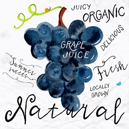 Vector illustration of watercolor grapes, hand drawn in in 1950s or 1960s style. Concept for farmers market, organic food, natural product design, wine package, herbal tea, grape seed water or oil Ilustração