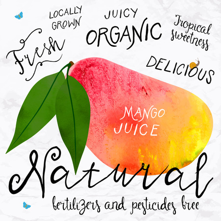 watercolour: Vector illustration of watercolor mango, hand drawn in in 1950s or 1960s style. Concept for farmers market, organic food, natural product design, soap package, herbal tea, etc.