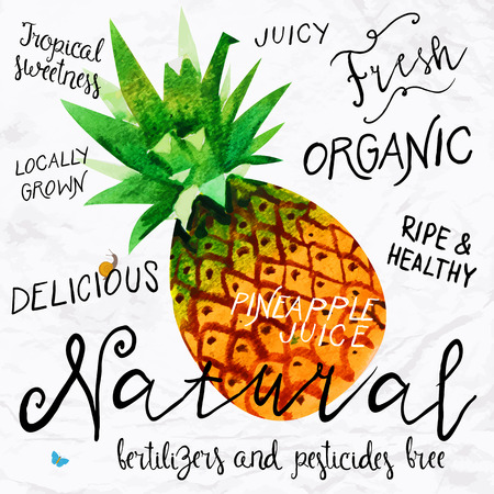 and organic: Vector illustration of watercolor pineapple, hand drawn in in 1950s or 1960s style. Concept for farmers market, organic food, natural product design, soap package, herbal tea, etc. Illustration