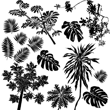 tropical flowers: Tropical flowers and plants set Illustration