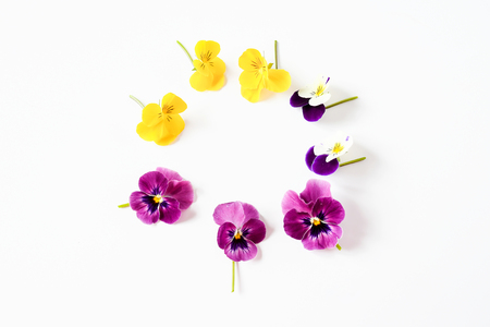 Beautiful mix color pansy violet flower in tricolor, white, yellow and violet or purple on White background. Stock Photo