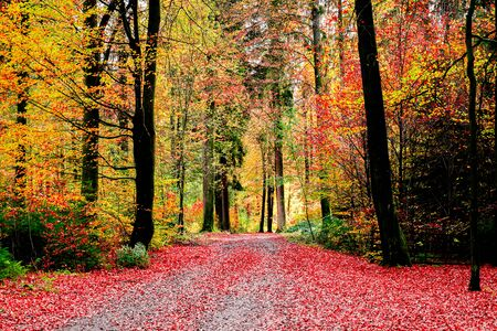 Landscape colorful of leaves in autumn seanson with colors change of leaves before fall down, romantic and fantastic scene of nature concept.