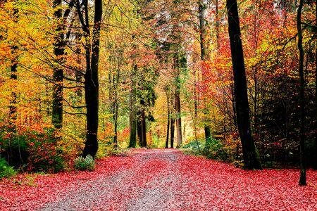 Landschaft bunt von Blättern in der Herbstsaison mit Farbwechsel der Blätter vor dem Herunterfallen, romantische und fantastische Szene des Naturkonzepts.