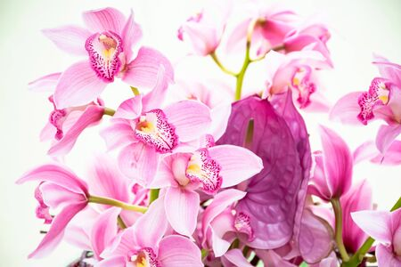 Beautiful fresh bouquet magenta cymbidium orchids sotft pink Lip, Tropical sweet flowers growing in greenhouse in shining day, Wedding, anniversary,birthday and buisness import products concepts.