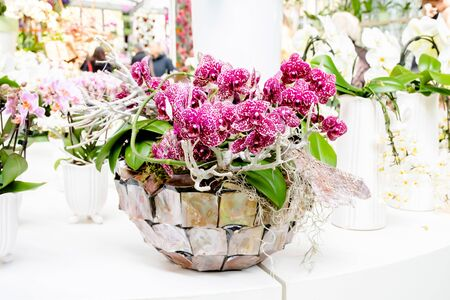 Beautiful orchid magenta cololr in nature vase on white table.