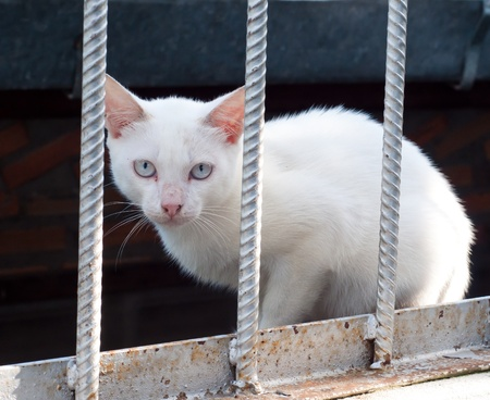 cat in the cage photo