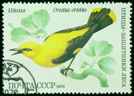 USSR - CIRCA 1979  a stamp printed by USSR  Russia , shows bird an Oriolus oriolus from the series Birds - a protectors wood, circa 1979 photo