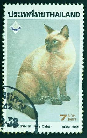 THAILAND - CIRCA 1995  a stamp printed by Thailand, shows Felis Catus, circa 1995 photo