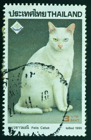 THAILAND - CIRCA 1995  a stamp printed by Thailand, shows Thai Felis Catus, circa 1995 photo