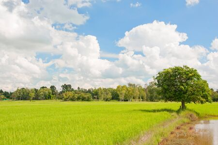 green field of rice with blue sky in thailand Stock Photo - 14481381