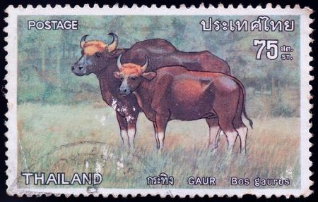 philately: THAILAND - CIRCA 1976: a stamp printed by Thailand, shows Gaur Bos gaurus, circa 1976 Stock Photo