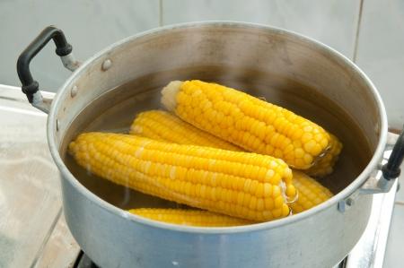 boiling: corn boiling in a pot
