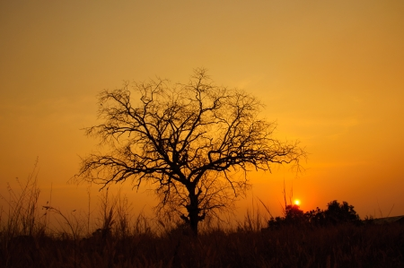 sunset with dead tree in country field photo