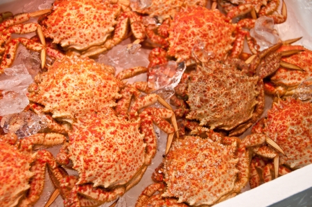 sapporo: japanese hairy crabs at the market Stock Photo
