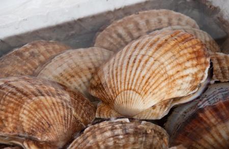 シーフード マーケットでホタテの貝殻