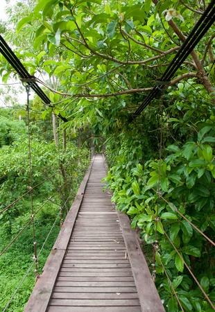 suspension bridge way to tropical jungle photo