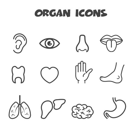 organ icons, mono vector symbols Illustration