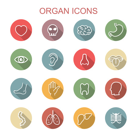 iconos de órganos sombra larga, símbolos vectoriales planos