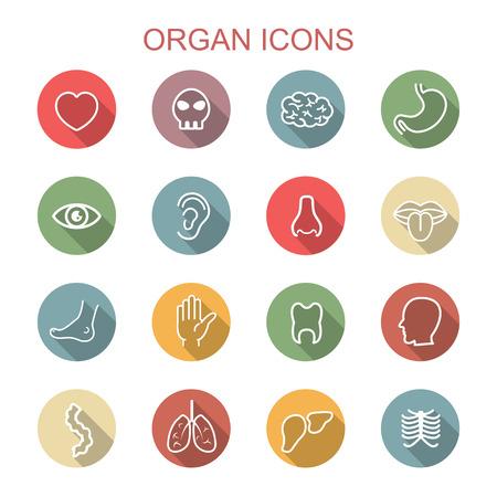 ojo humano: iconos de órganos sombra larga, símbolos vectoriales planos