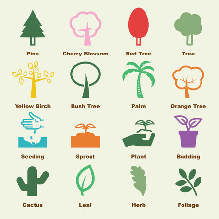 palm trees: tree elements, vector infographic icons