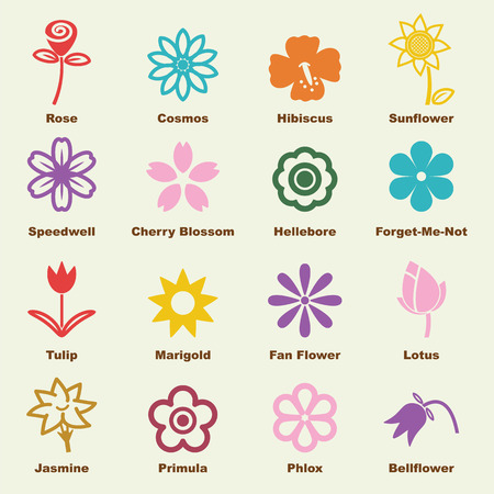 lotus petal: flower elements, vector infographic icons