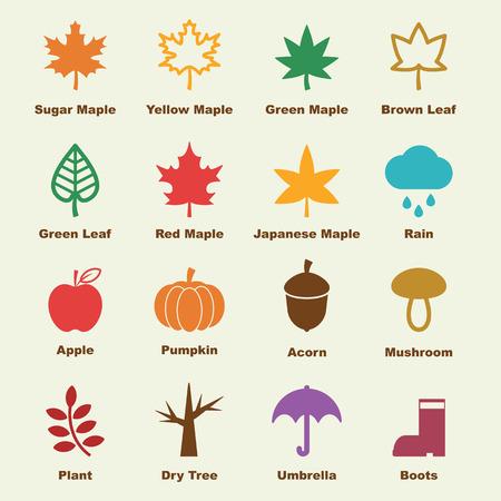 acorns: autumn elements, vector infographic icons