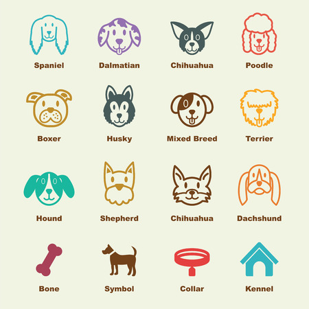 spaniel: dog elements, vector infographic icons