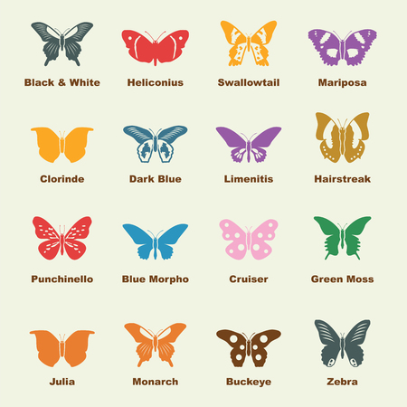 butterfly elements, vector infographic icons Illustration