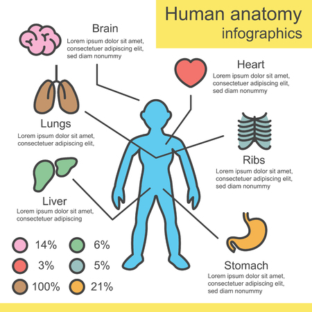 Human Anatomy Outline Infographics Vector Design Royalty Free