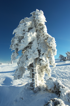 climatic: Frosted tree in subalpine climatic zone Stock Photo