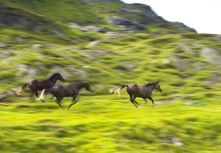 panning: Running Horses, panning technique