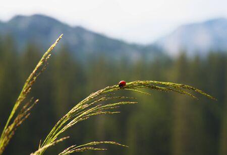 Ladybird Reklamní fotografie