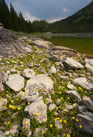 Flowers on the bank of the lake
