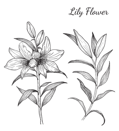 Lily Flowers from hand drawing.art and design Stock Vector - 55145455