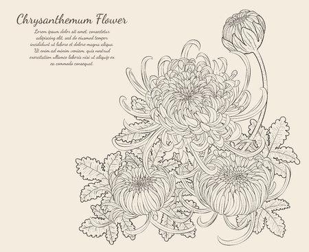 Chrysanthemum Flower from hand drawing. Vetores