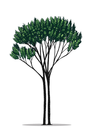 Tree vector by hand drawing.Green tree on white background.