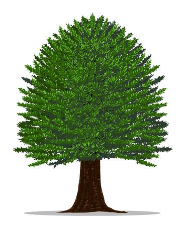 手描きによるツリー ベクトル。白い背景にイチイの木。
