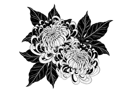 Chrysanthemum vintage card on white background. Chrysanthemum flower by hand drawing. Floral vintage highly detailed in line art style. Illustration