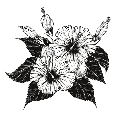 Hibiscus flower vector by hand drawing on white background.