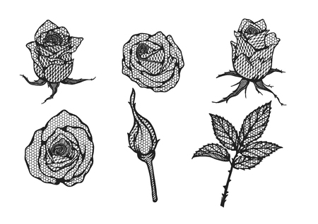 Line Drawing Of Rose Plant : Rose vector lace by hand drawing beautiful flower on brown