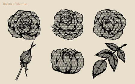 Breath of life rose vector set by hand drawing.Beautiful flower lace on white background.Rose lace art highly detailed in line art style.Breath of life rose for wallpaper