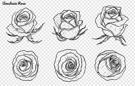 Rose vector set by hand drawing.Beautiful flower on brown background.Rose art highly detailed in line art style