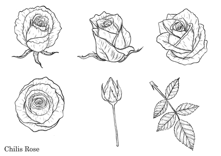 Rose vector set by hand drawing.Beautiful flower on brown background.Rose art highly detailed in line art style.  イラスト・ベクター素材